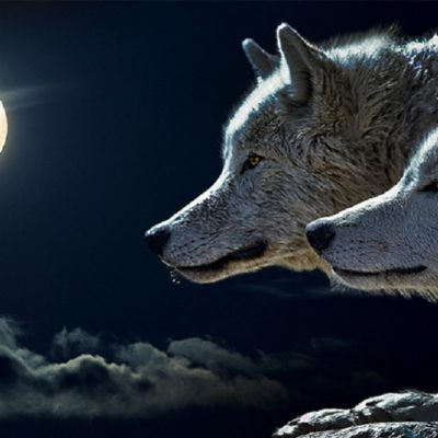 Οι δύο λύκοι.