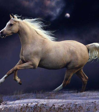Το άλογο